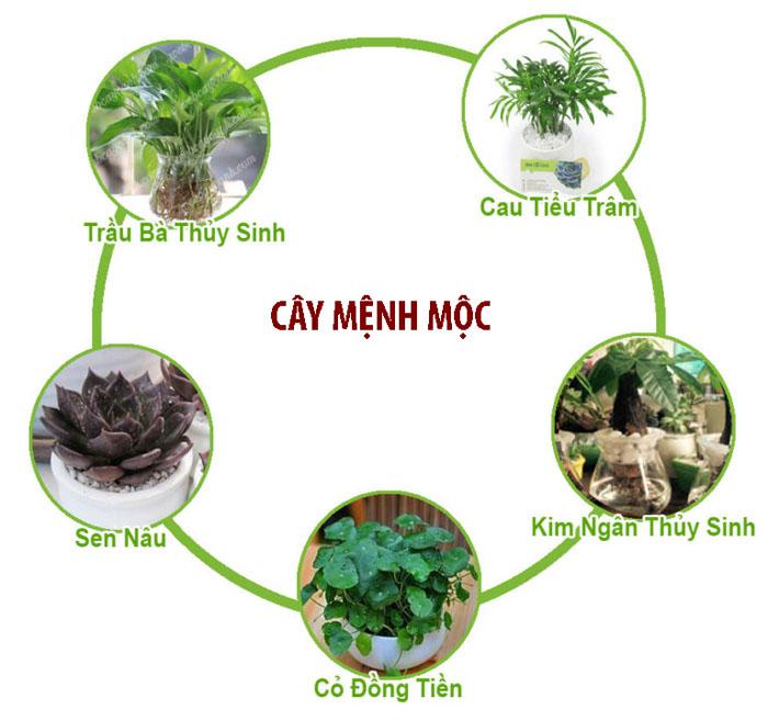 cay canh menh moc